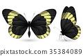 蝴蝶 一組 多彩 35384089