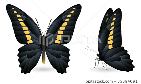 Set of colorful butterflies. Front and side view 35384091