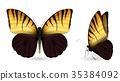 butterfly set colorful 35384092