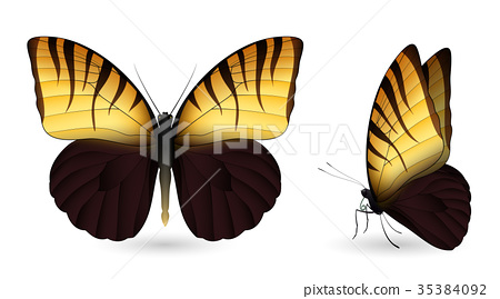 Set of colorful butterflies. Front and side view 35384092