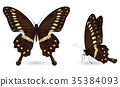 butterfly, set, colorful 35384093