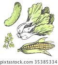 蔬菜 颜色 矢量 35385334