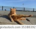 猫的Nobibi 35386392
