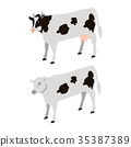 White Cows with Black Sports Vector Illustration 35387389