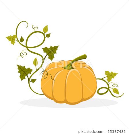 Ripe Pumpkin with Swirly Leafy Stem Illustration 35387483