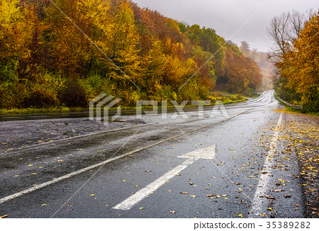 wet asphalt road through forest in deep autumn 35389282