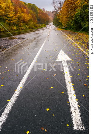 wet asphalt road through forest in deep autumn 35389283