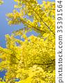 银杏 树叶 叶子 35391564