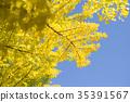 은행 나무 (빈 백) 35391567