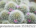 仙人掌 花朵 花卉 35392522