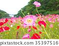 bloom, blossom, blossoms 35397516