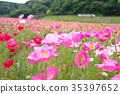 bloom, blossom, blossoms 35397652