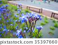 bloom, blossom, blossoms 35397660