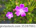 bloom, blossom, blossoms 35397661