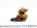 snails on white background  ,Can convey the love  35398059