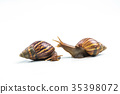 snails on white background  ,Can convey the love  35398072
