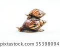 snails on white background  ,Can convey the love  35398094