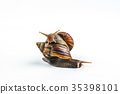 snails on white background  ,Can convey the love  35398101