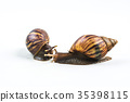snails on white background  ,Can convey the love  35398115