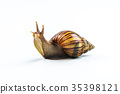snails on white background 35398121