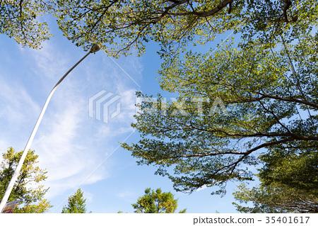 台灣 風景 天空 植物 白雲 雲彩 藍天 晴朗 晴空 樹 綠葉 陽光 仰望 路燈 竹北 新竹 樹下 35401617