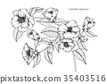 Camellia Japonica flower drawing. 35403516