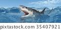 鯊魚 魚 海 35407921