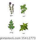 vector sketch herb 35412773