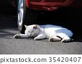 แมว,ลูกแมว,รถ 35420407