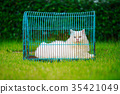 white Persian cat in cage on grass field 35421049