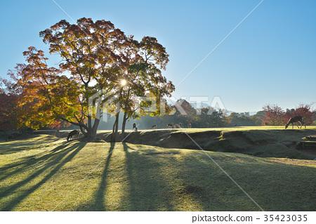 가을, 단풍, 사슴 35423035