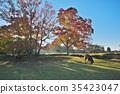 가을, 사슴, 단풍 35423047