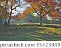 가을, 사슴, 단풍 35423049