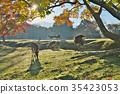 가을, 사슴, 단풍 35423053
