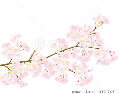 櫻花圖 35427691