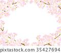 樱花 樱桃树 春天 35427694