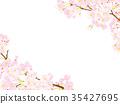 樱花 樱桃树 春天 35427695