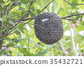 Close up of bees on honeycomb with lemon tree 35432721