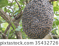 Close up of bees on honeycomb with lemon tree. 35432726