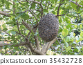 Close up of bees on honeycomb with lemon tree. 35432728