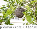 Close up of bees on honeycomb with lemon tree. 35432730