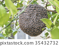 Close up of bees on honeycomb with lemon tree. 35432732