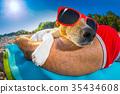 beach, dog, owner 35434608