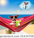 dog on hammock in summer 35434708