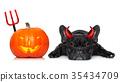 halloween dog  banner 35434709