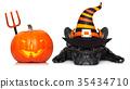 halloween dog  banner 35434710