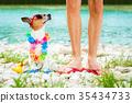 dog, holiday, owner 35434733