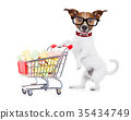 dog with shopping cart 35434749