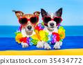 summer  honeymoon  dogs in love 35434772