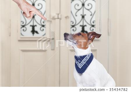 owner punishing his dog 35434782